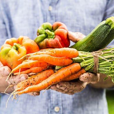 Warzywa prosto z pola zdjęcie